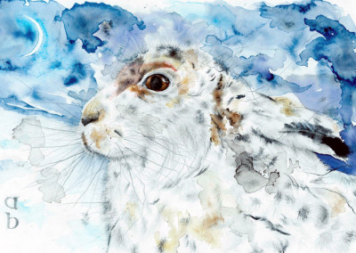 Mountain Hare in the Snow by Andy Broderick
