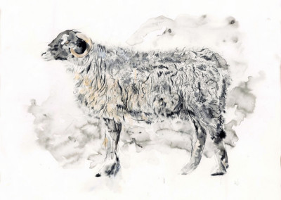 Sheep by Andy Broderick
