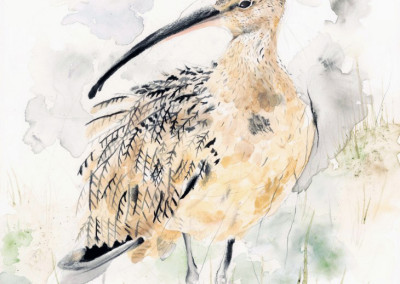 Curlew by Andy Broderick