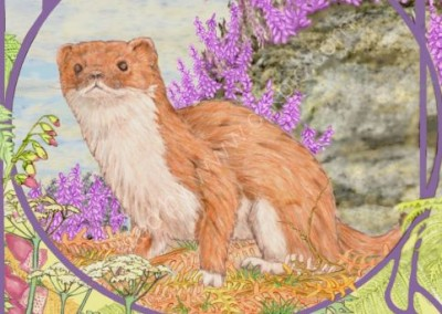 stoat on the moors